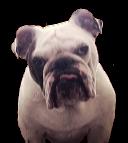 Circle Marketing Dog